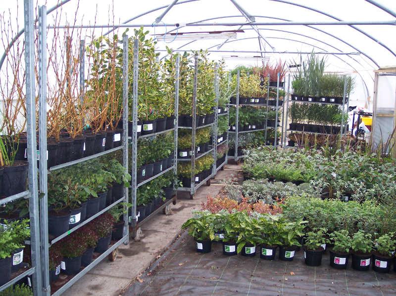 Wholesale Plants & Shrubs